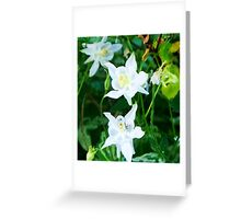 White Columbine with Tiny Insect Greeting Card