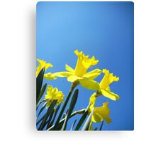 Daffodils in the Sky Canvas Print