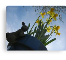 Planted Daffodils Canvas Print