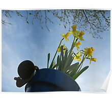 Planted Daffodils 2 Poster