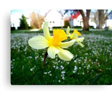 Daffodils with Street Scene Canvas Print