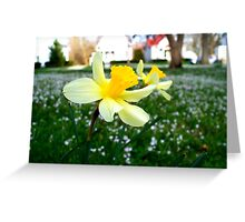 Daffodils with Street Scene Greeting Card