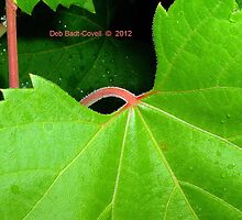 """Leafing"" it up to YOU! by Deb  Badt-Covell"