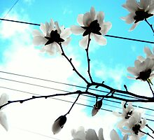 Blooms and Power Lines by CrystalFanning