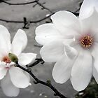 2 White Blooms Above the Sidewalk by CrystalFanning