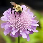 Bee on a Pincushion by Kenneth Keifer