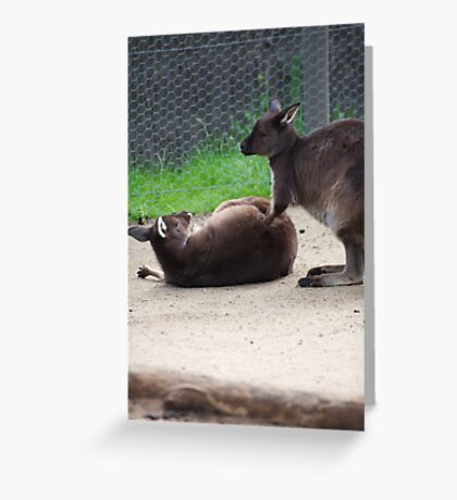 How About A Tummy Rub? Greeting Card