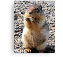 Mt Howard Ground Squirrel Canvas Print