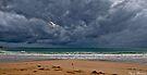 Seagull by Pene Stevens