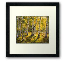Sunny birch Framed Print