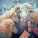 Merinos by Natasha Hodgson