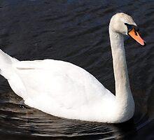 Beautiful Swan by Unelanvhi
