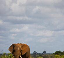 Elephant Grass by Kyle McLeod