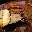 Birdbath Floaters by teresa731