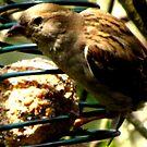 A Study In Sparrow Demeanor. III by ArtOfE