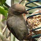 A Study In Sparrow Demeanor. IV by ArtOfE