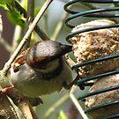 A Study In Sparrow Demeanor. V by ArtOfE