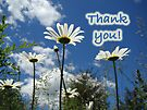 Thank You Greeting Card - Oxeye Daisy Wildflowers by MotherNature