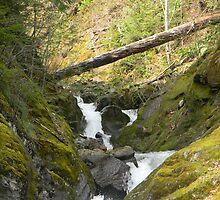 Creek  by wasdstomp