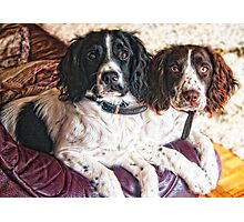 Benson and Jess - best friends Photographic Print