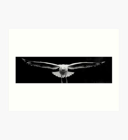 Looking seagull Art Print