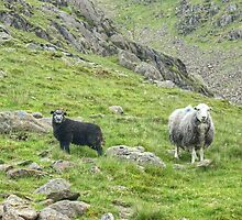 Lake District Icon...The Next Generation by VoluntaryRanger