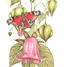 The Peacock Butterfly and the Angel Bells by Helena Wilsen - Saunders
