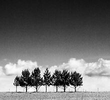 Cloud and Tree Study V by Nate Welk