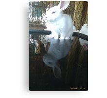 Cool bunny wade-N Pool Canvas Print