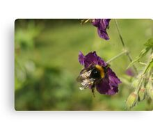 Bumble About Canvas Print