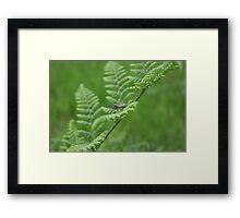 Fern & Cranefly Framed Print