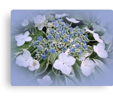 Variegated Lace Cap Hydrangea - Blue and White Canvas Print