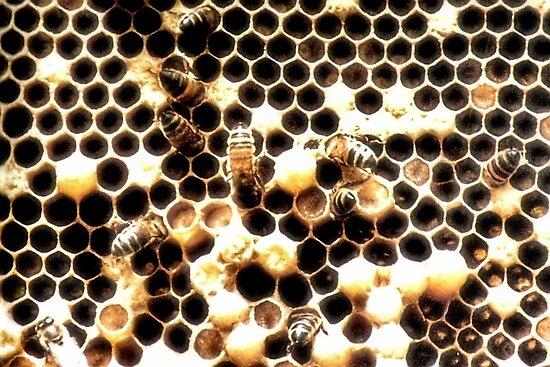 Honey Bees Under Threat by missmoneypenny