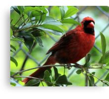 The Red Bird  Out Front # 2 Canvas Print
