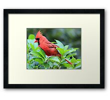 The Red Bird  Out Front # 4 Framed Print