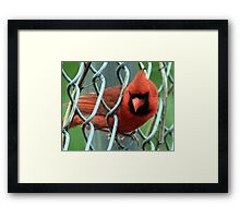 The Red Bird  Out Front # 7 Framed Print