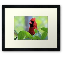 The Red Bird  Out Front # 8 Framed Print