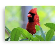 The Red Bird  Out Front # 8 Canvas Print