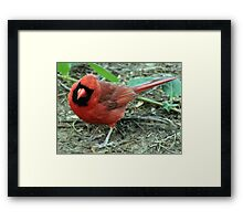 The Red Bird  Out Front # 10 Framed Print
