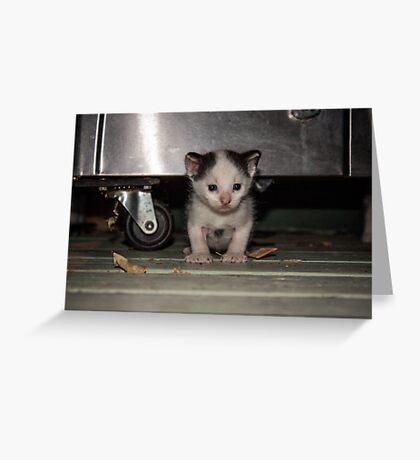 Stray Kitten  Greeting Card
