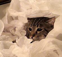 Tissue Predator II by Sarah N. Hood