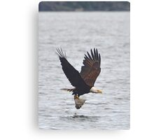 Eagle with Flounder Canvas Print