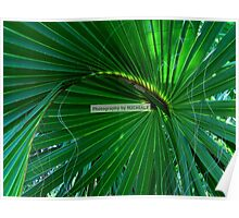 Playful Palm Poster