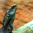 Frill Neck Lizard by Bevlea Ross