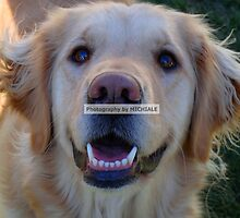Gracie by Michiale