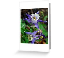 Columbine Greeting Card