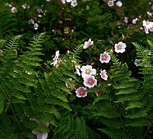 Sandridge Ferns & Roses by Alice Schuerman