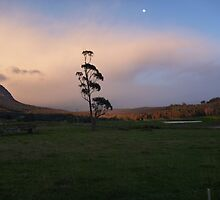 Early Morning,Mt Roland,Tas. by cobber113