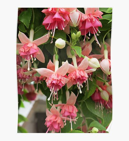 Flying Fuchsias! Poster