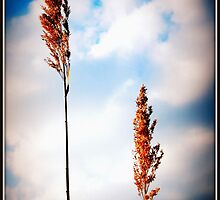 Reach For The Sky by Littlehalfwings